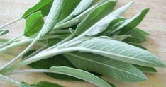 Sage Benefits & Information (Salvia Officinalis) Benefits Of Burning Sage, Sage Benefits, Salvia Officinalis, Natural Home Remedies, Herbal Remedies, Sage Herb, Cooking Herbs, Home Grown Vegetables, Medicinal Plants