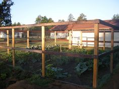 Grow it Eat it Fishing line deer fence Hobby Farm Pinterest