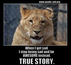 www.noahs-ark.org #LOL #Meme #Animal #Funny #humor