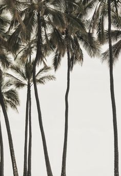 Want to be under these palm trees right now.
