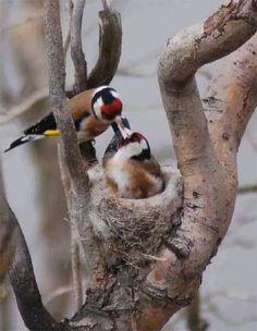 Pretty Birds, Beautiful Birds, Animals Beautiful, Exotic Birds, Colorful Birds, Bird Pictures, Horse Pictures, Black Bird Fly, Canary Birds