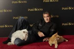 Antonio Banderas and Puss in Boots Cats
