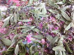 Drying herbs from the garden, maily here sage and the rose pedals from the Damask Rose