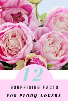 From planting peonies to peony care, there are plenty floral facts you should know before peony season.