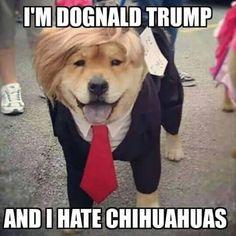 Donald Trump Meme Hahshahahahahahaha yes!!! Lol http://ibeebz.com