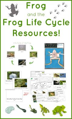 Frog and The Frog Life Cycle Resources! Free and Montessori educational printables, apps and more!