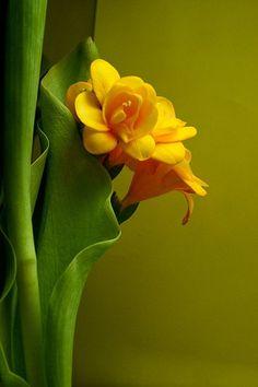 enigmatic40:  Flower power Lea Kingsbury