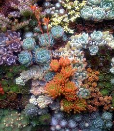 Succulents  #gardens #gardening #succulents