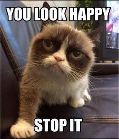 Grumpy cat Memes is one of the most famous cats on internet.Today we collect Grumpy cat Memes morning that are so hilarious and humor.Just read out these Grumpy cat Memes morning. Grumpy Cat Quotes, Funny Grumpy Cat Memes, Funny Animal Jokes, Cat Jokes, Cute Funny Animals, Funny Animal Pictures, Funny Cats, Funny Memes, Funniest Animals