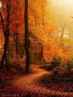 The autumn weather and scenery makes even the most traveled paths new again! Beautiful Places, Beautiful Pictures, Beautiful Scenery, Beautiful Forest, Romantic Places, Beautiful World, Autumn Scenes, All Nature, Autumn Nature