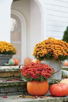 Carve Out a Mumkin | Fall's favorite flower. Mums are an essential fall decorating element in Southern homes and gardens because they're sun-loving and easy to replant year after year. Potted mums are especially welcoming on a porch, front or back, arranged alongside stacks of festive pumpkins. We also love our container gardening (read as: easy, affordable, no green thumb required), and these potted mums are some of the best ones we've seen. Start by taking a crash course from Grumpy about…