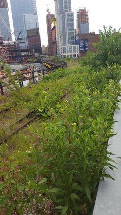 parque high line en nueva york
