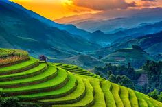 Sunset at the Padi or Rice Terraces