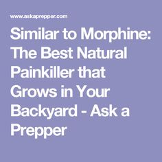 Similar to Morphine: The Best Natural Painkiller that Grows in Your Backyard - Ask a Prepper