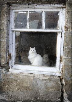 Barn Cats  In Window