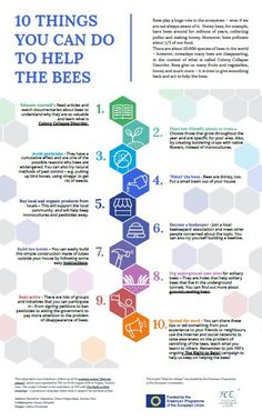 http://www.yeenet.eu/images/stories/YEE_PROJECTS/Training_Courses/TC-Bee-the-change/Bee-the-change_Infographic_10-things.pdf