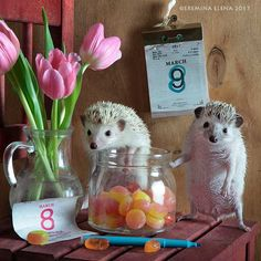 While in the house is candy, the 8th of March could last forever... by Elena Eremina