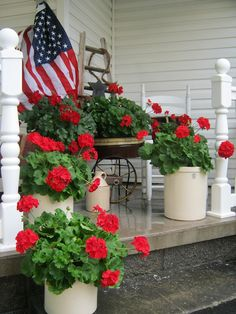 with brush in hand: Geraniums in Red...