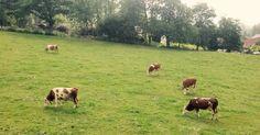 Urlaub am Bauernhof mit Austria.at! Austria, Animals, Animales, Animaux, Animal, Animais