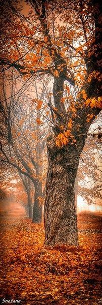 """""""Forêt brumeuse de rêveries berce mon coeur de son parfum d'octobre."""" Poésie Sandra Dulier - Automne - Octobre - Signet"""