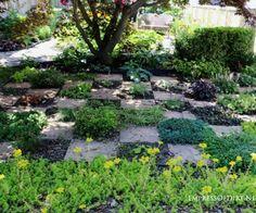 checkerboard-herb-garden-6x