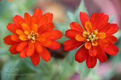 Flower by 305931252. @go4fotos