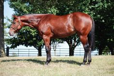 Good Luck Charley, Hip No. 60 – 2012 colt by Zippos Mr Good Bar and out of Burning Iron by Iron Rebel; dam has produced 9 point earners that have won 1,181.5 pts combined, nearly 50,000k in National Snaffle Bit Assoc. earnings, more than 6,000k in AQHA World Championship Show earnings; full sister was AQHA year-end high-point, SR and youth champion in western pleasure. Multiple year-end high-point reserve championships. Visit www.aqha.com/horsesale to view the 2013 AQHA World Show Sale catalog.