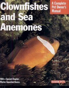 Clownfish and Sea Anemones - John Tullock