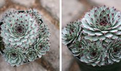 My newest addition to a growing collection by Megan Conlin (organicpixel), via Flickr
