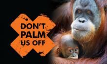 Expanding palm oil demand has increased rainforest deforestation in places like Indonesia. Synthetic biology has a solution: genetically engineered yeast and bacteria. But why do environmentalists reject it? Rainforest Deforestation, Rainforests, University Of Bath, Animal Cruelty, Palm Oil, Orangutan, Global Warming, Trees To Plant, Conservation