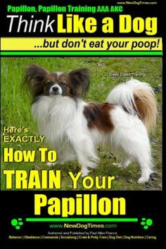 Papillon Papillon Training AAA AKC Think Like a Dog but Dont Eat Your Poop  Papillon Breed Expert Training  Heres EXACTLY How to Train Your Papillon Volume 1 *** Details can be found by clicking on the image.