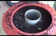 Με ενα μικρο σχετικα δοχειο 60 λιτρων παραγουμε 55 χλωρα κρεμμυδακια η 55 φυτα φραουλας.