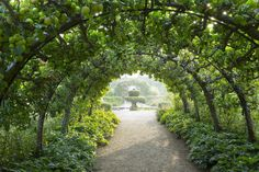 Arching apple trees at Highgrove gardens Prince Charles espalier apple trees; Gardenista