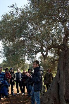 Enzo Suma e i suoi Millenari di Puglia.     Per saperne di più su questo evento, visitate il nostro portale: http://www.pugliaevents.it/it/gli-eventi/ipogea-viaggio-nel-mondo-dei-frantoi-ipogei