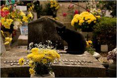 BLACK CAT - VARANO ROME  CEMETERY