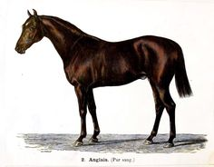 Vintage French horse illustration