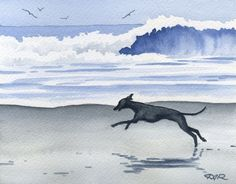 Italian Greyhound Art Print ITALIAN GREYHOUND At The Beach Signed by Artist DJ Rogers About the Artwork: This is a professional open edition Italian Greyhound art print from an original watercolor painting. Italian Greyhound art print is hand signed on the front by the artist. The