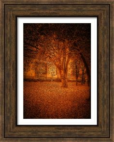 Autumn Trees  Framed Print By Fine Art By Andrew David