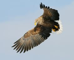 The Shadow by Harry  Eggens on 500px
