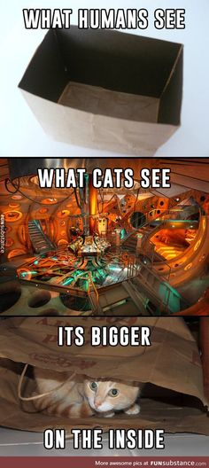 The way cats see the world