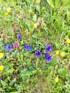 Bergfrühling Start in der Aletsch Arena: Eggishorn ab 4.6.15 offen, ab 13.6. Bettmerhorn und Hohfluh. Tolle Angebote Bergbahn, Kulinarik und Übernachtung unter aletscharena.ch/bergfruehling #Wallis #schweiz #berge #frühling #aletscharena #natur #feelfree Plants, Congratulations, Mountains, Amazing, Nature, Planters, Plant, Planting