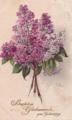 Catherine Klein victorian postcard...