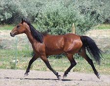 Horse Training: All Go And No Whoa?