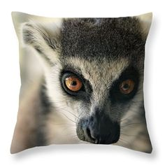 Lemurs gaze Throw Pillow for Sale by Helen Kelly Lemurs, Pillow Sale, Fine Art America, Throw Pillows, Stylish, Prints, Animals, Image, Cushions