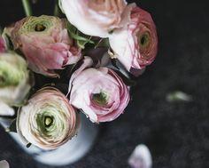 """577 tykkäystä, 12 kommenttia - Media (@mediajamshidi) Instagramissa: """"Beauties in pink 🌸"""""""