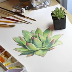 "aaronapsley: ""  Finishing up a painting of a little Echeveria agavoides in watercolor. """
