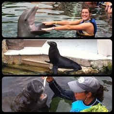Dolphin, sea lion and manatee triple play in Dolphin Discovery Riviera Maya!    www.dolphindiscovery.com