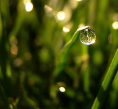 Spring in a drop of water