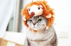 lol animal pics.... jesus, im like a crazy cat lady, but these kinds of pictures get me every time!