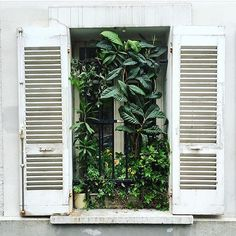 What to do if you don't have a great view outside your window  #jungalowstyle